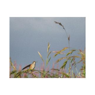 Hummingbird Stretched Canvas Prints