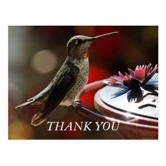 Hummingbird Thank You Card Postcard