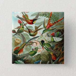 Hummingbird (Trochilidae) by Haeckel Button