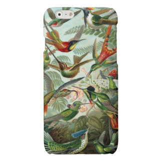Hummingbird (Trochilidae) by Haeckel iPhone 6 Plus Case