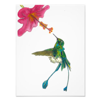 Hummingbird with Hibiscus Photo Print
