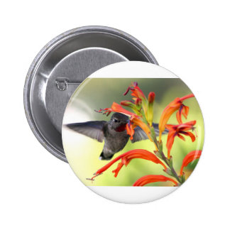 Hummingbird with Lily Caught In Motion Pinback Buttons