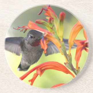 Hummingbird with Lily Caught In Motion Drink Coaster