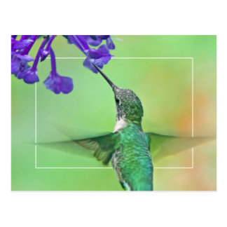 Hummingbird with Mona Lavender Postcard