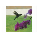 Hummingbird with Orchid Post Card