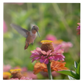 Hummingbird with Zinnias Tile