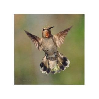 Hummingbird Wood Art