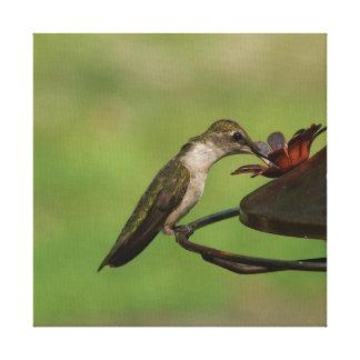 Hummingbird, Wrapped Canvas Print.
