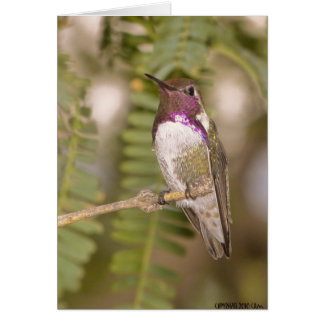 Hummingbirds068 Card