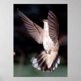 Hummingbirds 2005-0945 poster