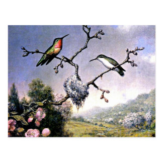 Hummingbirds and Apple Blossoms Postcard