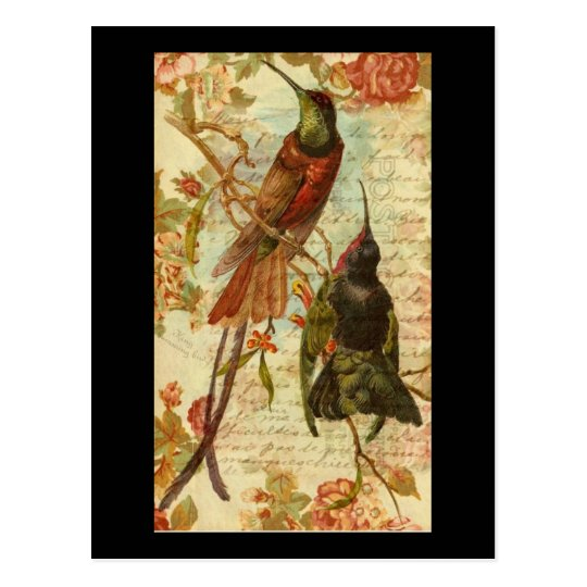 Hummingbirds and Roses Postcard