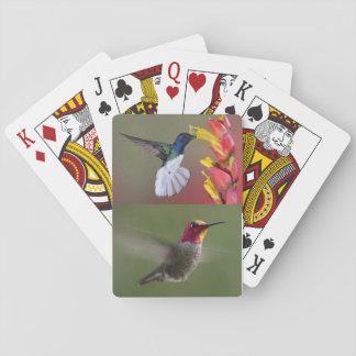 Hummingbirds deck of cards