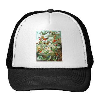 Hummingbirds Hat