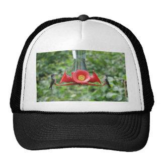 Hummingbirds Trucker Hat