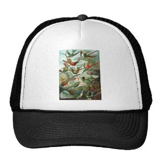 Hummingbirds Hats