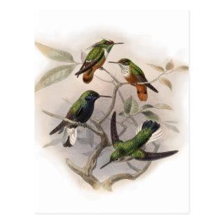 Hummingbirds In Flight Postcard