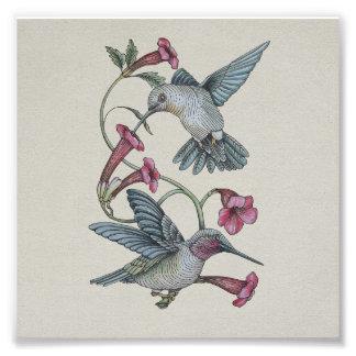 Hummingbirds & Vine Photo Print