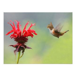 Hummingcat Photo Art