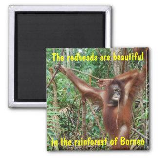 Humorous Animals Refrigerator Magnets
