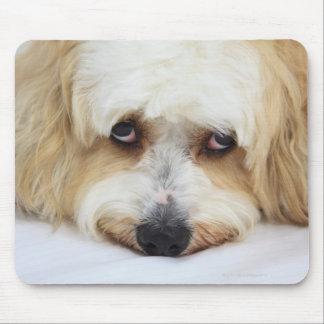 humorous close-up of bichon frise dog mouse mat