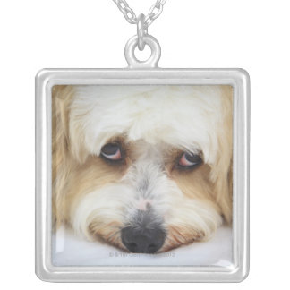 humorous close-up of bichon frise dog necklace
