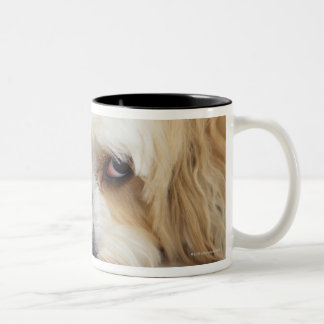 humorous close-up of bichon frise dog Two-Tone coffee mug