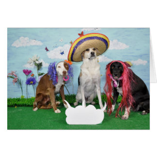 Humorous greeting card, photo of 3 dogs, any theme card