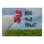 Humourous Chicken Rise and Shine Happy Birthday Greeting Card