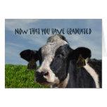 Humourous Congratulations on Graduating Cow Bovine