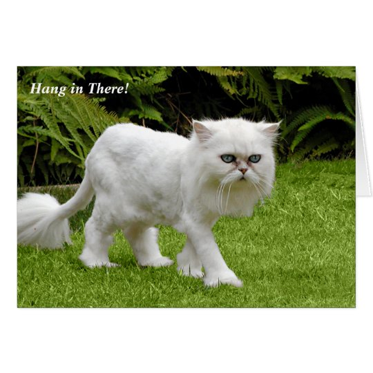Humourous White Persian Shaved Cat Birthday Card