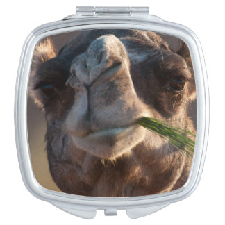 Hump Day Camel Feasting on Green Grass Compact Mirror