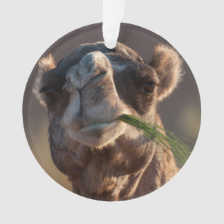 Hump Day Camel Feasting on Green Grass Ornament