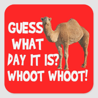 Hump Day Camel Guess What Day It Is Stickers
