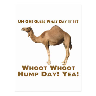 Hump Day Postcard