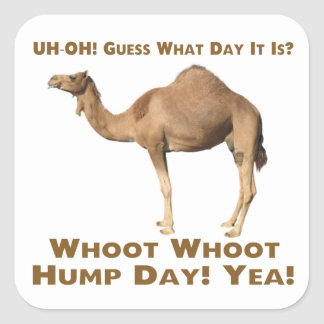 Hump Day Square Sticker