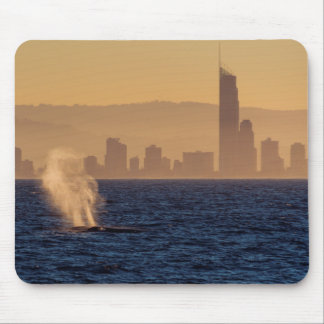 Humpack Whales Surfers Paradise Queensland Custom Mouse Pad