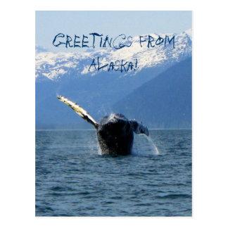 Humpback Barrel Roll Alaska Souvenir Postcards