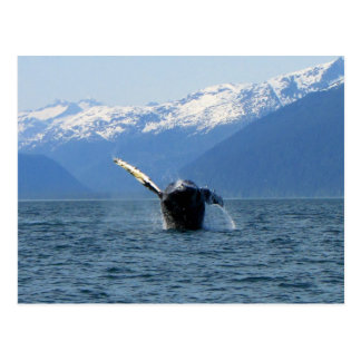 Humpback Barrel Roll Post Card