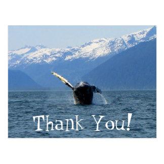 Humpback Barrel Roll; Thank You Post Card