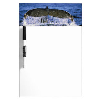 Humpback tail. dry erase board
