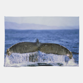 Humpback tail. tea towel