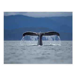 Humpback Whale 2 Postcard