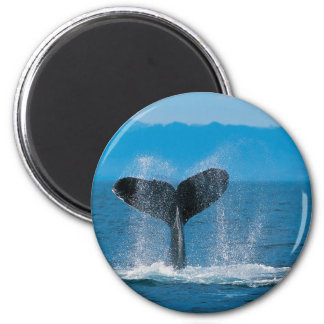 Humpback Whale 6 Cm Round Magnet