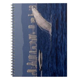 Humpback Whale Breach Surfers Paradise Australia Notebooks