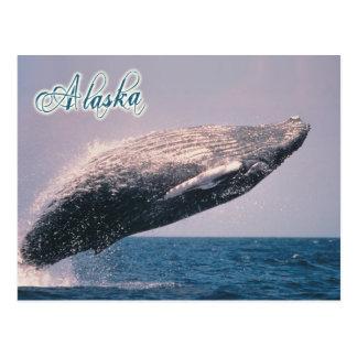 Humpback whale breaching, Alaska Postcards