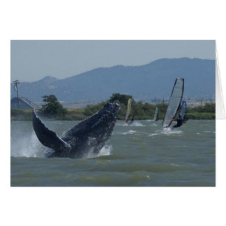 Humpback Whale Breaching by Windsurfers Greeting Card