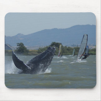 Humpback Whale Breaching by Windsurfers Mousepads