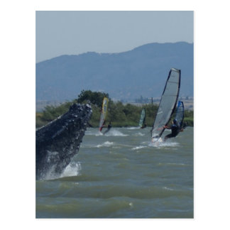 Humpback Whale Breaching by Windsurfers Postcards