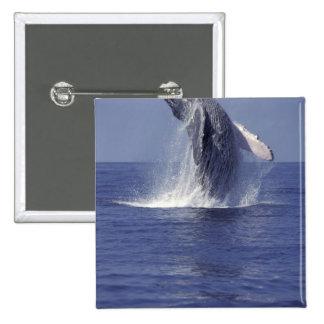 Humpback whale breaching (Megaptera 15 Cm Square Badge